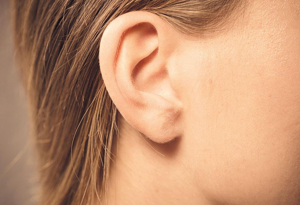 Paracelsus Apotheke Das Ohr